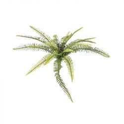 EUROPALMS Forest fern, 40cm