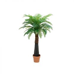 EUROPALMS Canary Date Palm, 150 cm