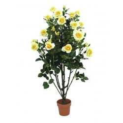 Rosebush softcreme with cementpot 140cm
