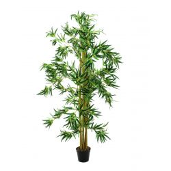 Bamboo multi trunk with cementpot 5'